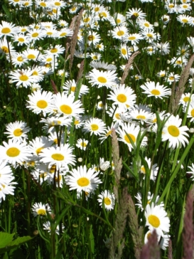 NowDaisy